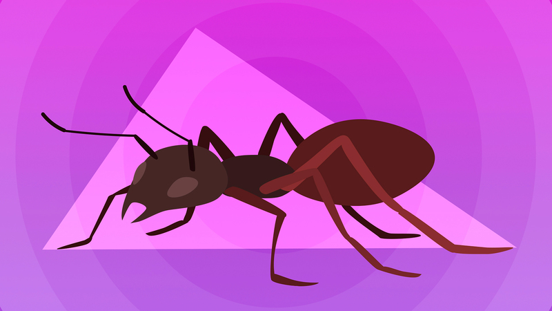Apache Ant: быстрый старт